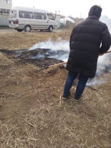 枯草を燃やす