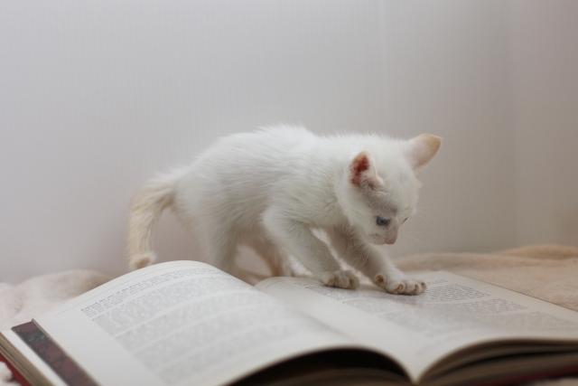 教科書が読めない