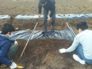 フリースクールの中学生も参加し、ジャガイモの種を植える。