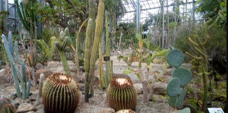 筑波実験植物園の温室内の様子