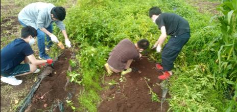 自然に親しむ農業体験